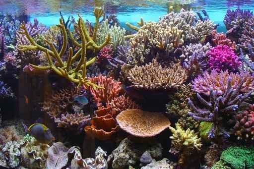 L'Aquarium corallien