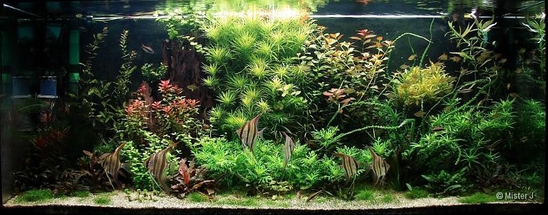 Biotope tropical