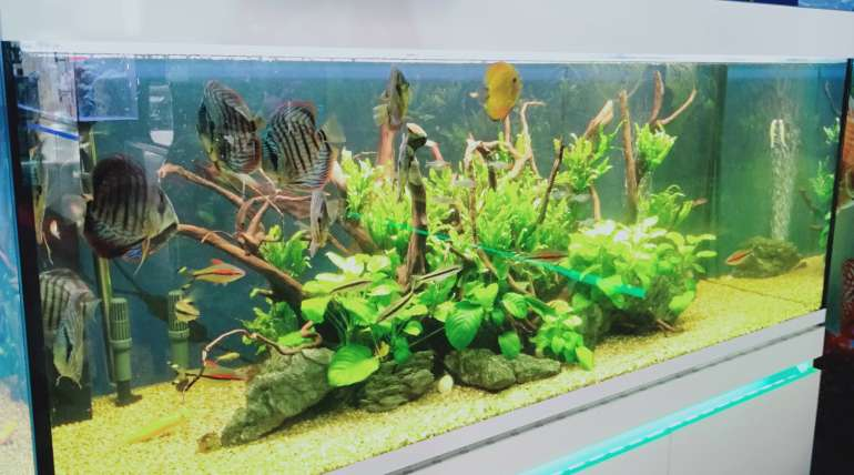 Different aquariums for different ideas
